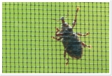 Käfer auf Transpatec