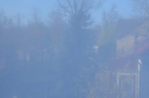 herkömmlicher Pollenschutz am Fenster